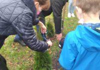 Światowy Dzień Drzewa w SPS 10
